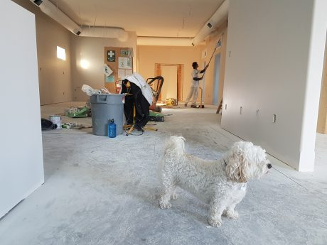 Dog in the house that's being renovated.