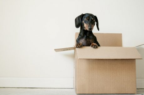 Pets are with you when move for a job