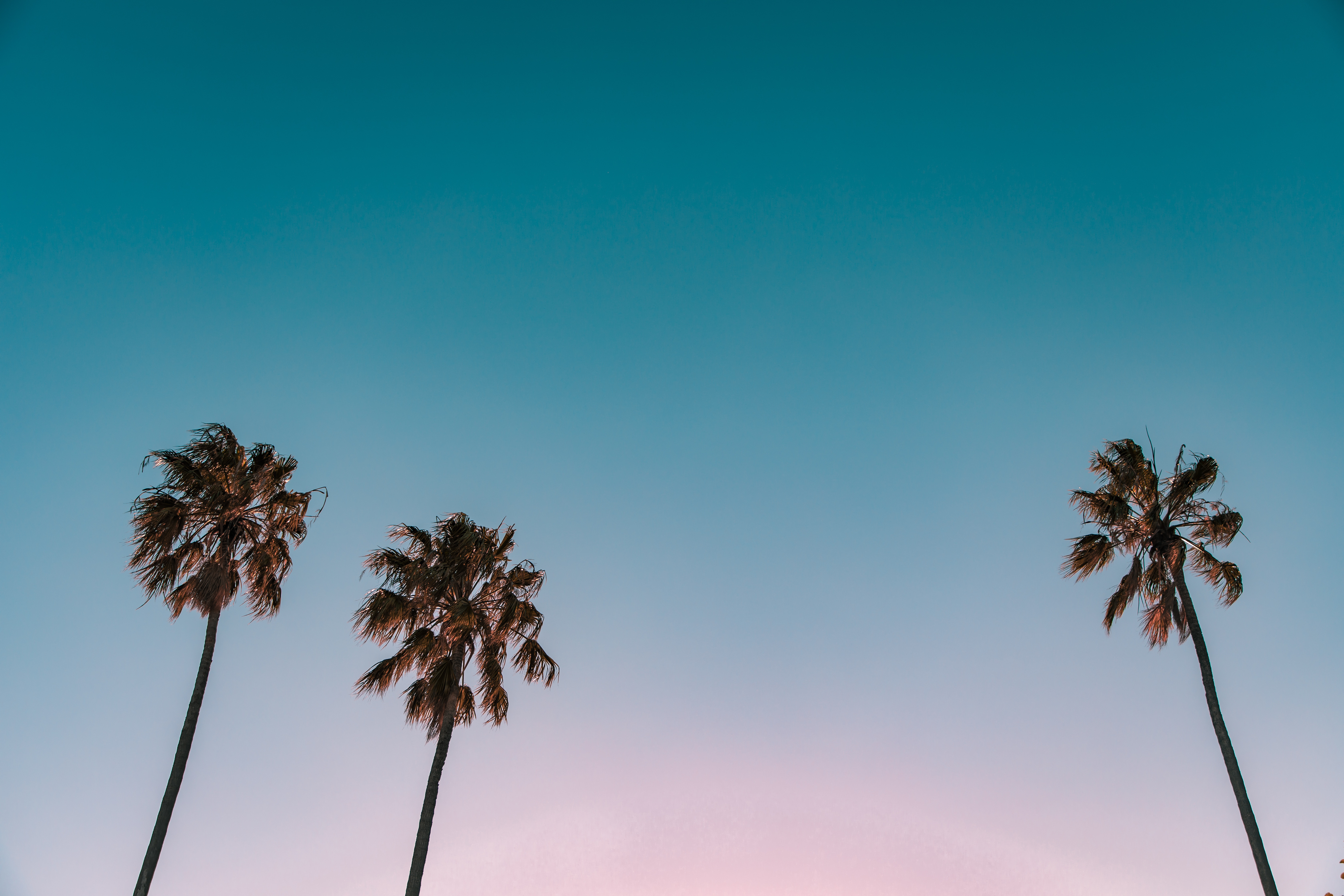 Image of some palms.