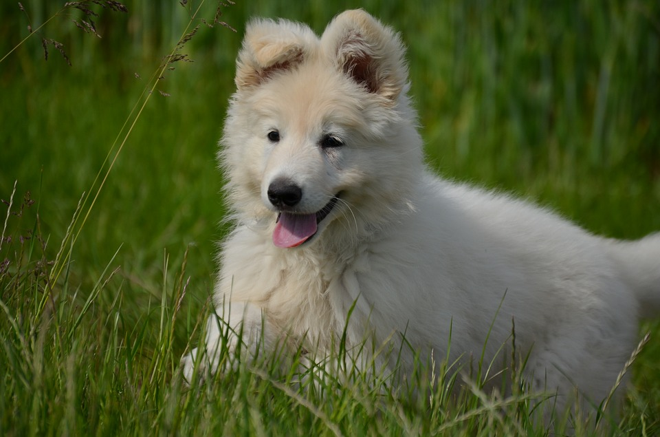 A happy dog running in the grass