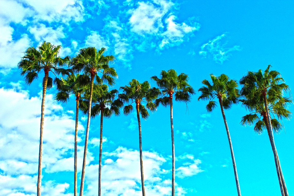 The palms and the clear sky a San Antonio family moving to LA is going to enjoy.